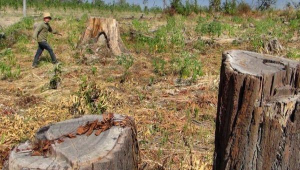 Tình trạng lấn chiếm, chuyển nhượng đất trái pháp luật dễ tạo ra điểm nóng đất đai tại nhiều địa phương? (nguồn Internet)