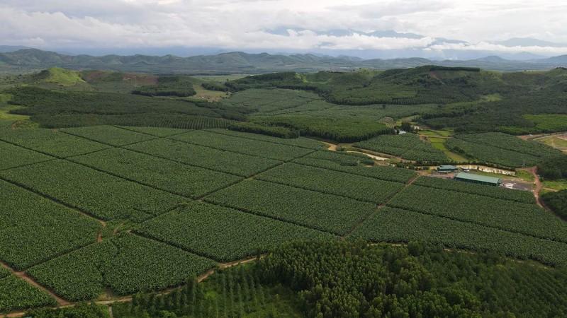 Dự án liên hợp nông nghiệp công nghệ cao Phước An ở huyện Krông Pắc, tỉnh Đắk Lắk.