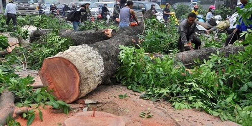 Người nổi tiếng phản ứng sao trước đề án chặt 6.700 cây xanh?