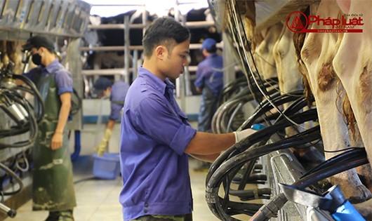 Bản tin Tiêu dùng: Khám phá quy trình chế biến sữa tại công ty cổ phần bò sữa Mộc Châu