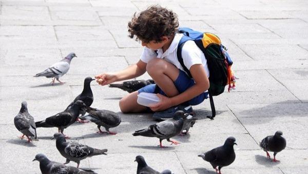 Du khách đến Thái Lan có thể bị phạt số tiền tương đương 10 triệu đồng nếu tự ý cho chim bồ câu ăn (ảnh minh họa)