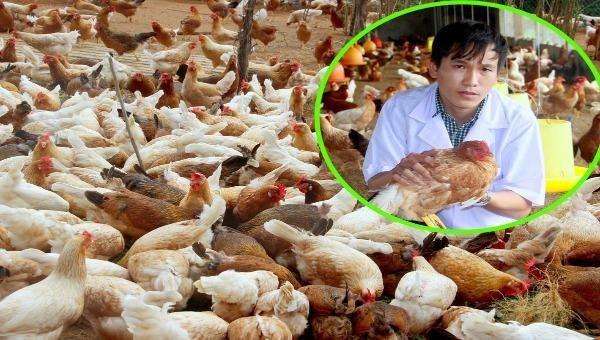 Chàng kỹ sư 9X bỏ phố về quê nuôi gà thảo dược