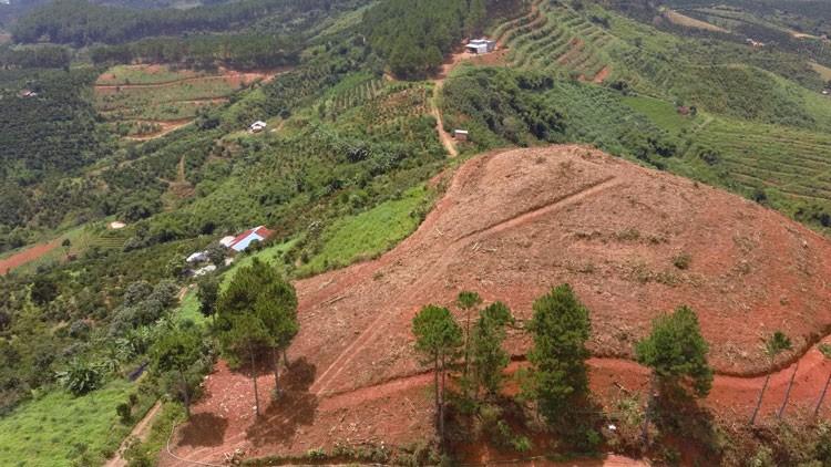 Rừng thông tại Tiểu khu 26B xã Nam Hà, huyện Lâm Hà bị triệt hạ trái phép để chiếm dụng đất