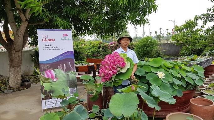 Thạc sĩ Làng Sen chọn sen để khởi nghiệp