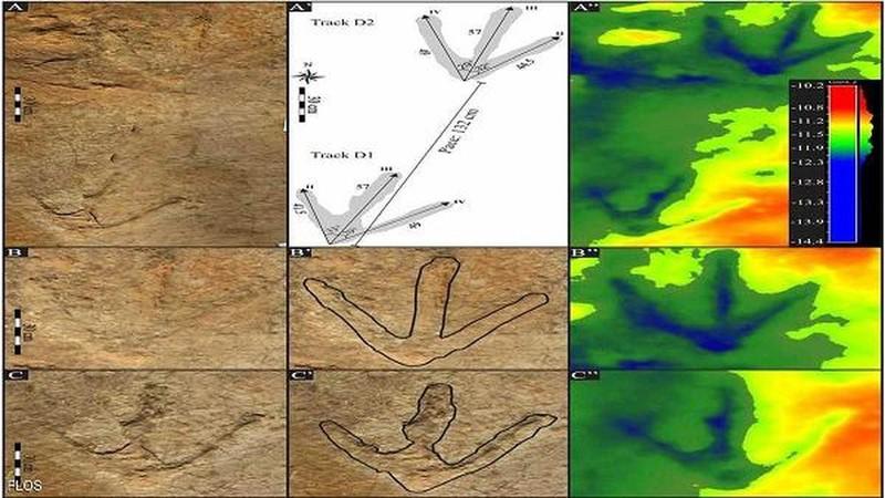 Một số vết chân loài động vật lạ được tìm thấy tại Châu Phi.