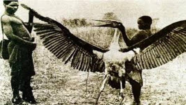 Nghi vấn khủng long khổng lồ vẫn còn tồn tại – (Kỳ 4): Bí ẩn loài khủng long có cánh thoắt ẩn thoắt hiện