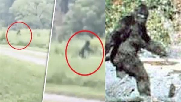 """Một số hình ảnh về sự xuất hiện của """"quái vật chân to"""", hay còn gọi là Bigfoot."""