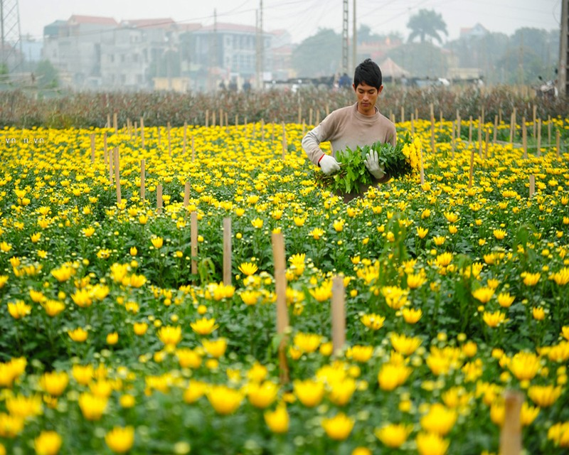 Các vựa hoa đều sẵn sàng mừng xuân Tân Sửu.