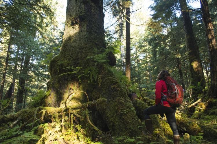 Rừng già hấp thụ ánh sáng mặt trời chiếu vào, cung cấp môi trường sống cho loài sinh vật trong rừng.