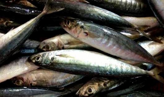Phát hiện chất cực độc trong 30 tấn cá nục đông lạnh tại Quảng Trị