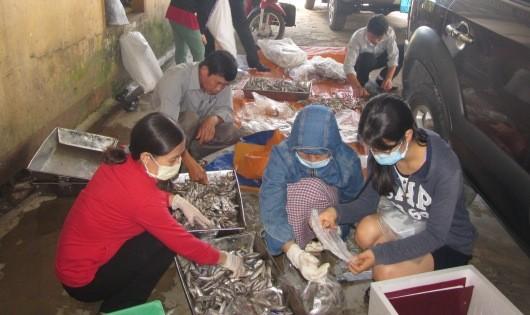 Phân chia các lô cá để gửi mẫu ra Bộ Y tế xét nghiệm.