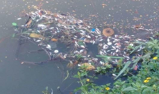 Nhiều loài cá chết trắng trên sông An Cựu, TP.Huế