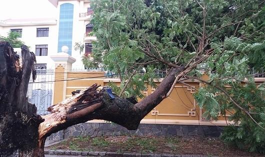 Huế: Nhiều cây xanh bật gốc do ảnh hưởng bão số 4