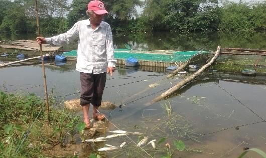 Nhiều người dân nuôi cá trên sông Bồ điêu đứng vì cá chết