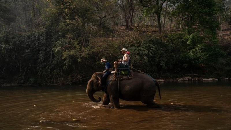"""Hàng ngàn con voi Thái Lan sẽ rơi vào tình cảnh """"thất nghiệp"""" phải đi… ăn xin vì dịch bệnh Covid-19"""