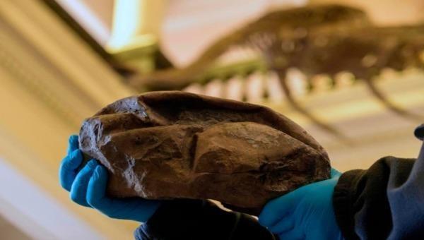 Phát hiện hóa thạch trứng ở Nam Cực là của rắn biển khổng lồ