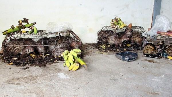 Những động vật hoang dã còn sống sót vẫn đang được tạm nhốt trong các lồng sắt tại nhà kho hải quan tỉnh Quảng Trị