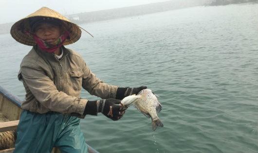 Ngu dân Hà Tĩnh xót xa nhìn cá chết