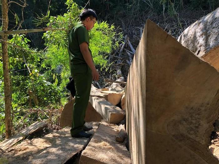 Hiện trường nơi rừng bị phá hoại