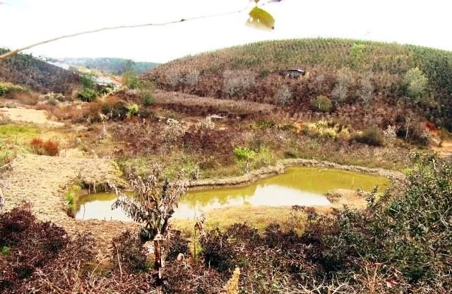 Gần 500 ha cây trồng bị thiệt hại vì thời tiết xấu