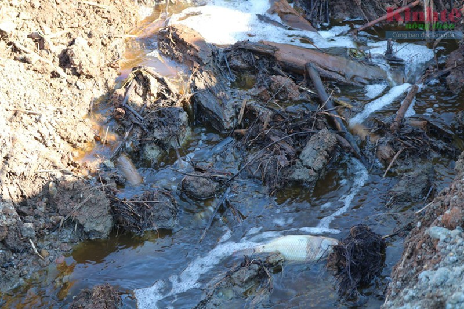 Phát hiện cá bị chết trên dòng nước thải của Công ty Long Huy Hùng. Ảnh Kinh tế nông thôn