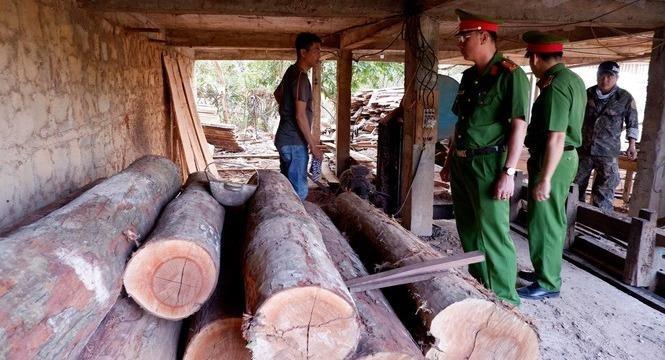 Mua gỗ lậu chủ xưởng bị điều tra