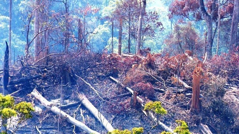 Kỷ luật hạt trưởng kiểm lâm để mất rừng