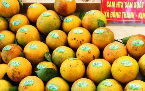 Giới thiệu cam và nông sản Hưng Yên tới người tiêu dùng thủ đô