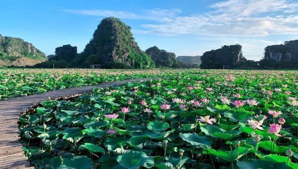 Hồ sen nở rộ giữa trời Thu ở Hang Múa trở thành điểm check in mới của Ninh Bình