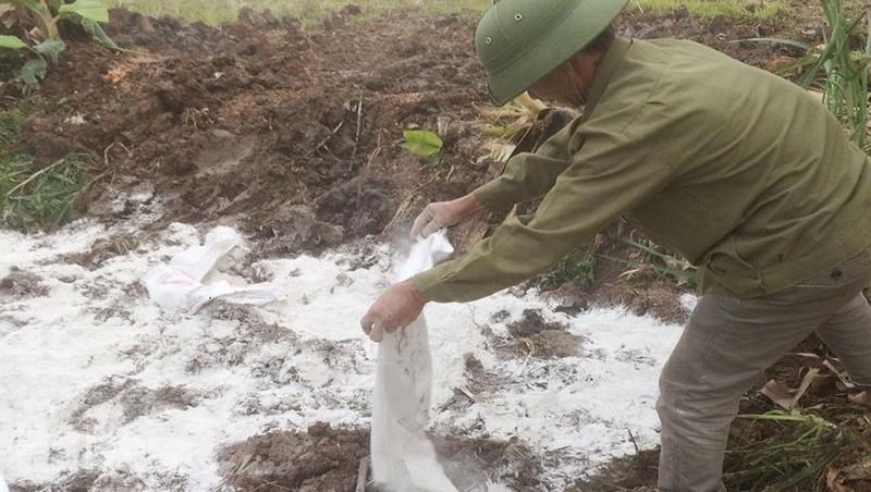 Rải vôi bột khử trùng trên hố chôn hủy bò bị bệnh viêm da nổi cục tại phường Duy Hải.