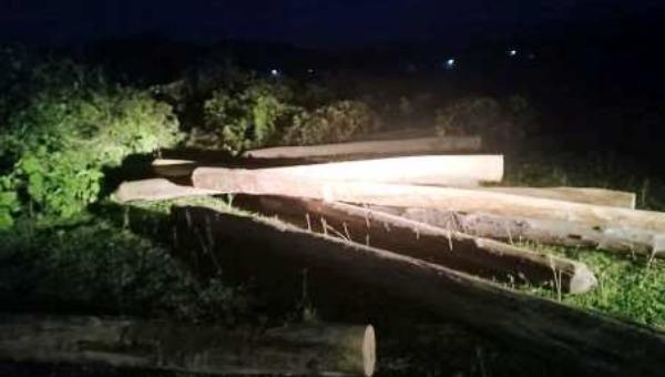 Hà Tĩnh: Phát hiện số lượng lớn gỗ lậu tập kết trong đêm tại nghĩa trang