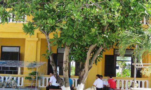 Đoàn công tác ngồi trò chuyện dưới tán bàng vuông trên đảo Sinh Tồn Đông.