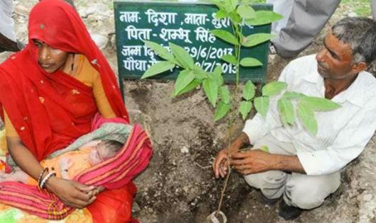 Trồng 111 cây xanh để ăn mừng sự ra đời của bé gái.