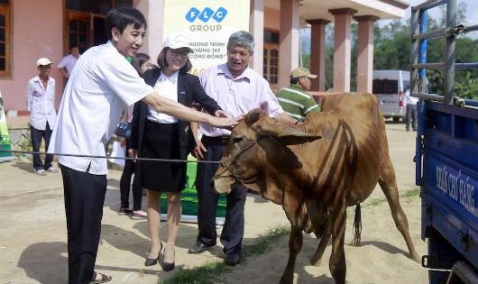 Tập đoàn FLC trao bê giống cho 6 huyện ở Bình Định
