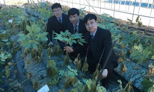 Thượng tôn pháp luật để bảo tồn tinh hoa Nam y Việt