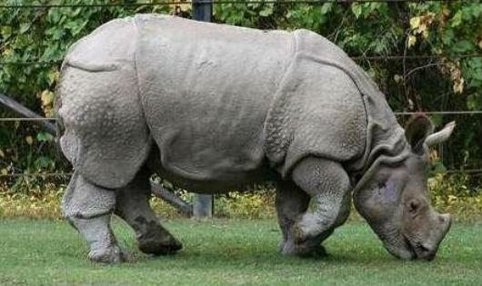 Ký ức già làng S'Tiêng về con tê giác cuối cùng của Việt Nam