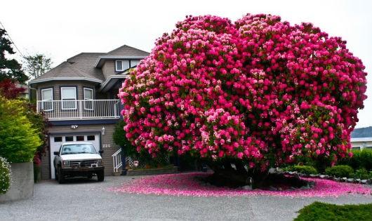 10 loài cây cổ thụ đẹp nhất thế giới