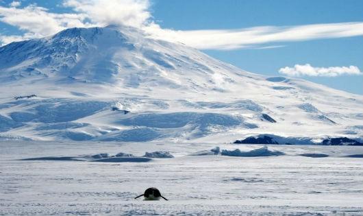 """Phát hiện """"chảo lửa"""" giữa Nam Cực lạnh lẽo"""