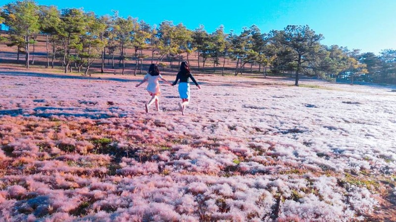 Kết quả hình ảnh cho đồi cỏ hồng