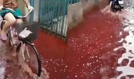 Nước đỏ quạch ngập kín hẻm 944 do lò mổ heo xả thải ra môi trường khi trời mưa (ảnh cắt từ clip)