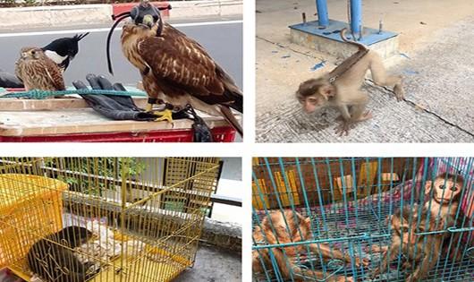 Giải cứu động vật hoang dã bị bán rong trên phố