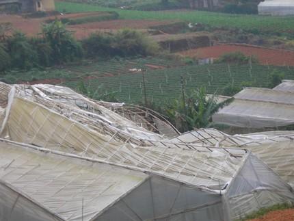 Nhà kính trồng hoa bị lốc xoáy làm hư hại