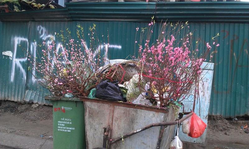 Những cành đào sau khi phục vụ Tết lại phải vào thùng rác...