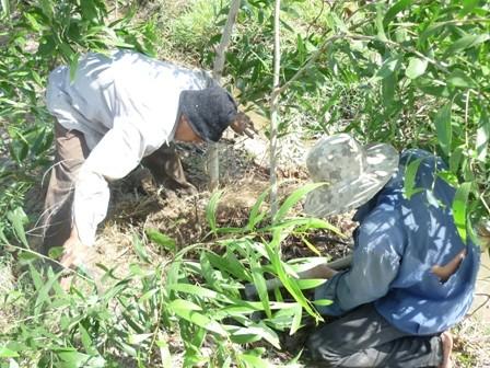 Mười Hiền, Công Bình hì hục tìm hang, bới đất ngoài đồng để tìm rắn độc.