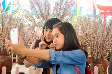 Giới trẻ thích thú tạo dáng bên hoa Anh Đào nở rộ tại Hạ Long