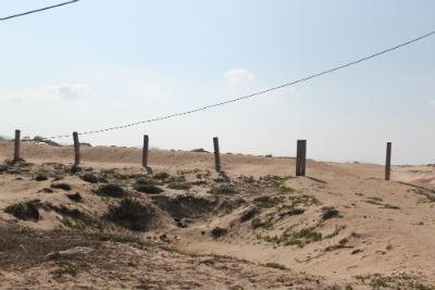 Những đồi cát thuộc khu vực dự án bị chủ đầu tư khai thác, khoét sâu thành vũng