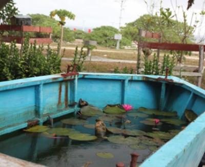 Mấy bông súng hiếm hoi sống bằng chút nước ngọt khan hiếm trên đảo Song Tử Tây, nhìn vào đấy có lẽ sẽ vơi bớt đi một chút nhớ nhà