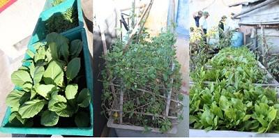 Lính đảo rất khéo trồng rau, trên đảo chìm như đảo Đá Thị, rau được trồng ở mọi nơi có khoảng trống có thể tận dụng. Chúng được chăm bón cẩn thận trong từng thùng xốp hoặc nhựa thế này, đất trồng được mang từ đất liền ra