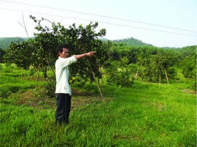 Ông Nguyễn Quảng Sỹ (xóm 8, xã Sơn Thọ) bên trang trại của gia đình