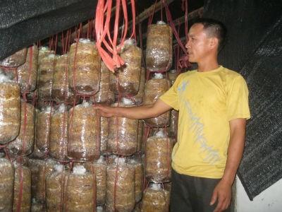 Vượt qua quá khứ nghiện ngập, nay anh Đại là chủ trang trại nấm sò